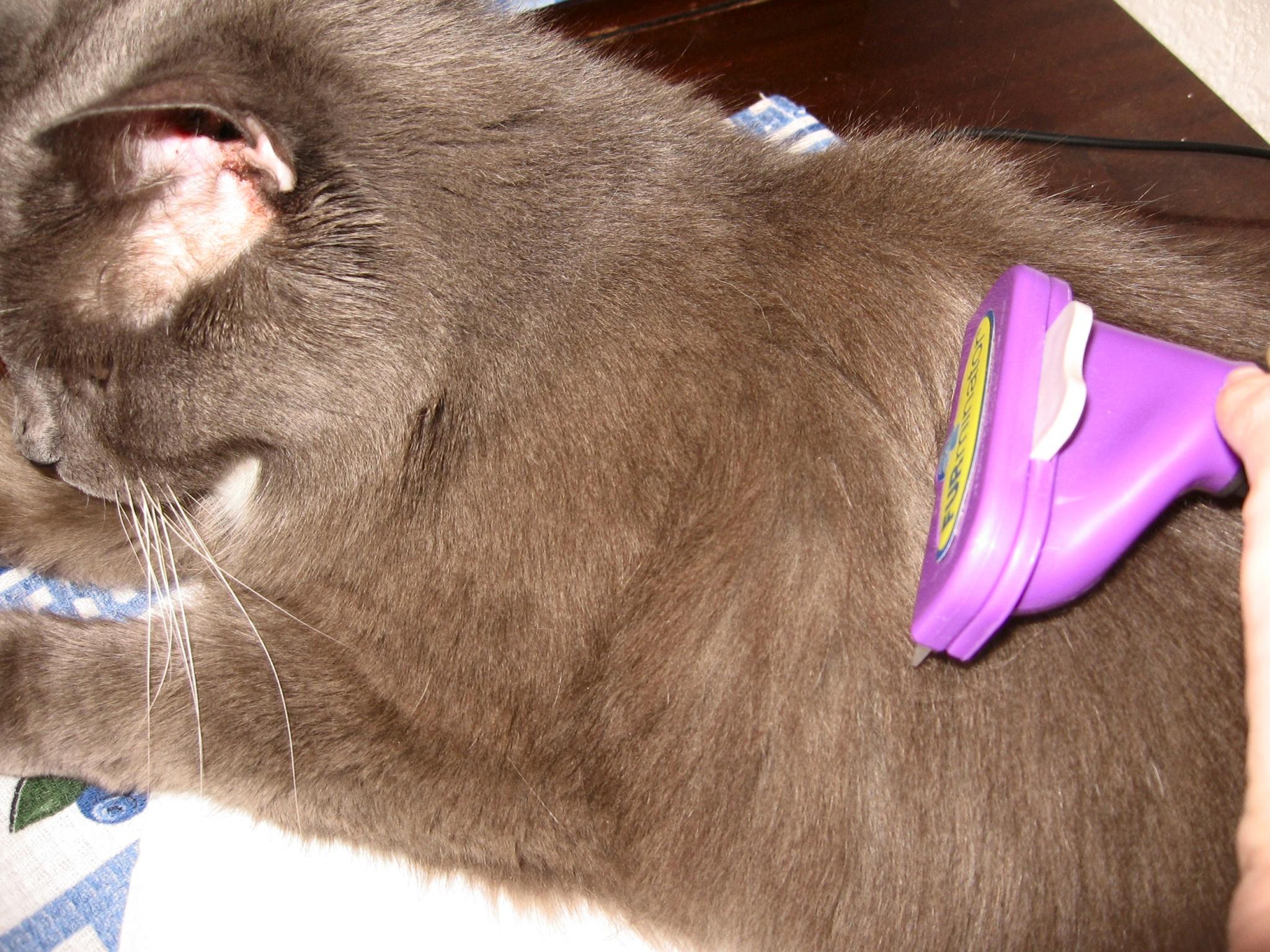 потом, фурминатор для кошек фото до и после неклюдов числится