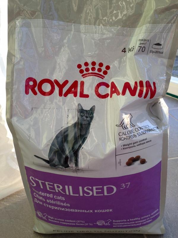 Кошка не ест сухой корм royal canin