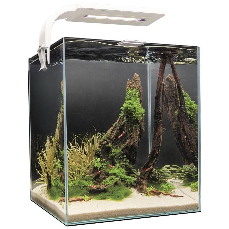 учит сына нано аквариум фото европе