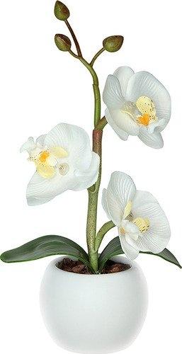 Цветок орхидея в адлере купить — img 8